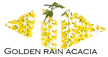 Golden rain accacia